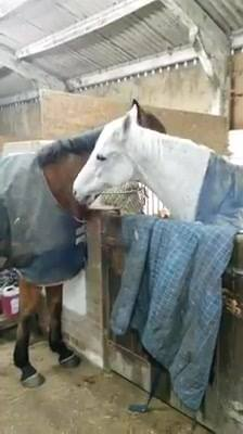 Here are Tiny and Sid having a morning groom... Horses often spend lots of time grooming each other which helps develop ...