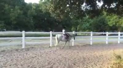 Meet Roo and Myka. Roo is a 12.3 hand Welsh pony originally from Virginia. He the new star at Hidden Creek Ranch.