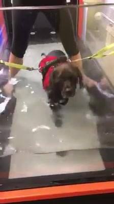 Here's Lola being quite the brave girl during her first underwater treadmill session.  Keep up the good work Lola!